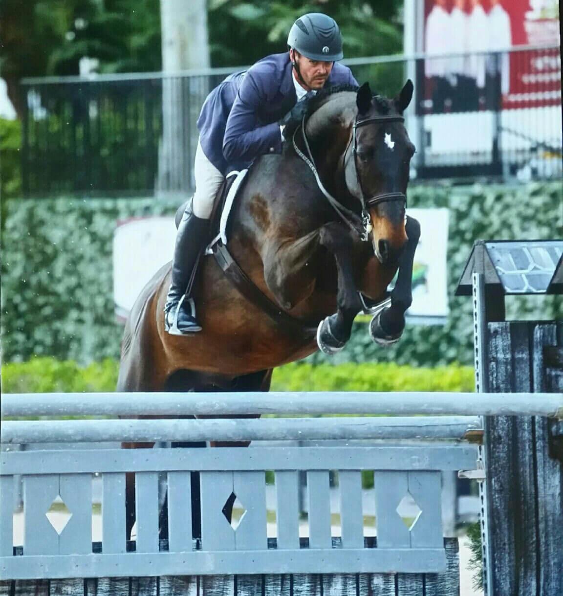 Angus Horse